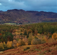 the Borrowdale woods
